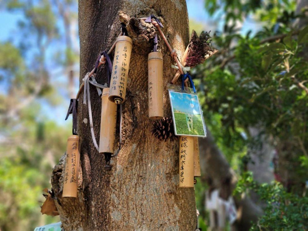 寵物天堂-寵物樹葬呈現圖片
