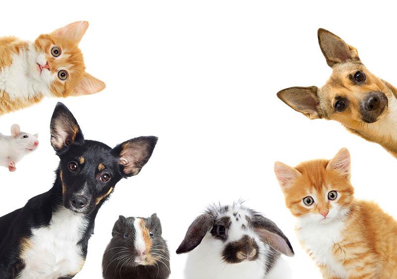 寵物頭七會回家嗎?寵物頭七禁忌是否有呢?